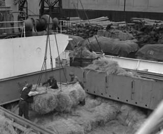 Workers unloading esparto grass in Sunderland