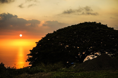 hawaii hawaiibeltroad hawaiiroute11 captaincook sunset plants konacoast pacificocean tree wyojones np