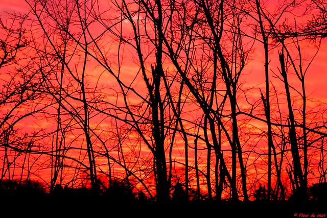 Pink sunset_