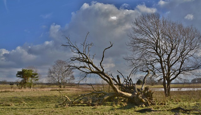 'Achter 't Zaand' - Dwingelderveld  - in EXPLORE !
