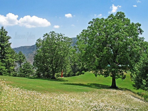 khyber pakhtunkhwa station hill gali nathia walnut blue slope clouds place lovely photo picture view image beautiful colour goheer mansoor pakistan green spot summer nathiagali kalabagh daises wild flower