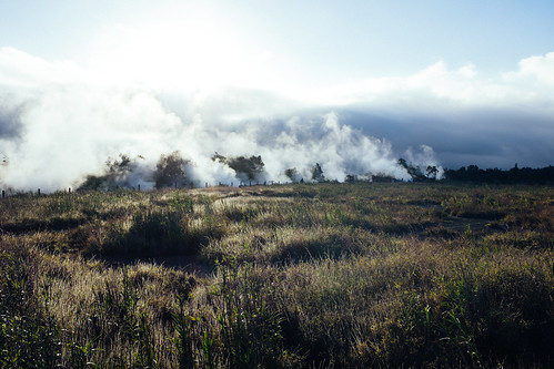 "Image titled ""Steam Vents, Volcano National Park."""