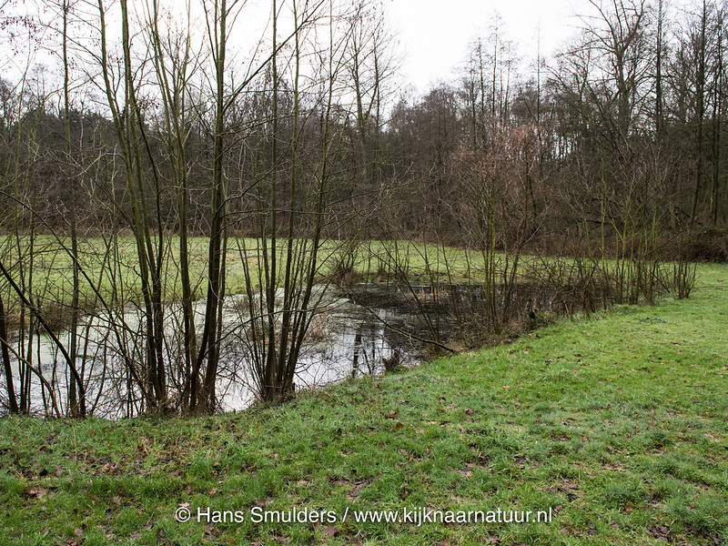 818_0006 - Mussenbroek Roggel