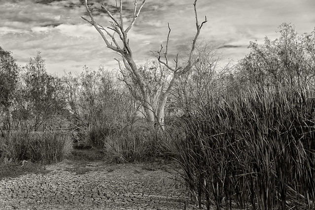 impressions of lagoon creek