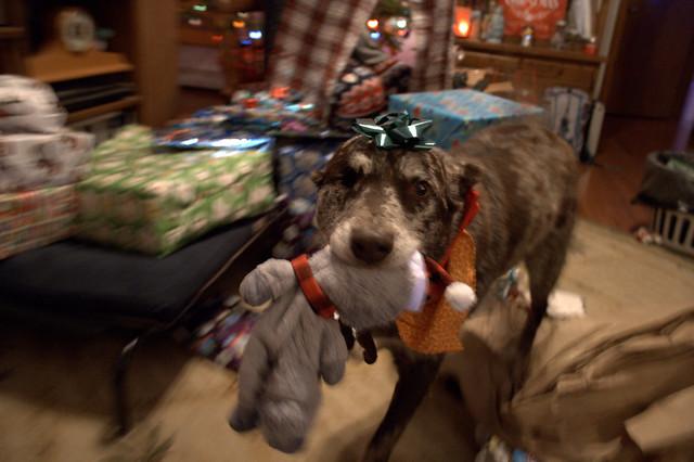358/365 Happy Christmas Dog