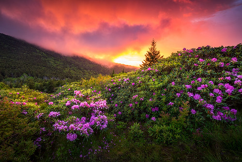 northcarolina outdoors nc appalachian trail spring landscape tennessee tn mountain nature flowers sunset rhododendron sky outdoorphotographer nikon zeiss milvus hiking roan carversgap mountains