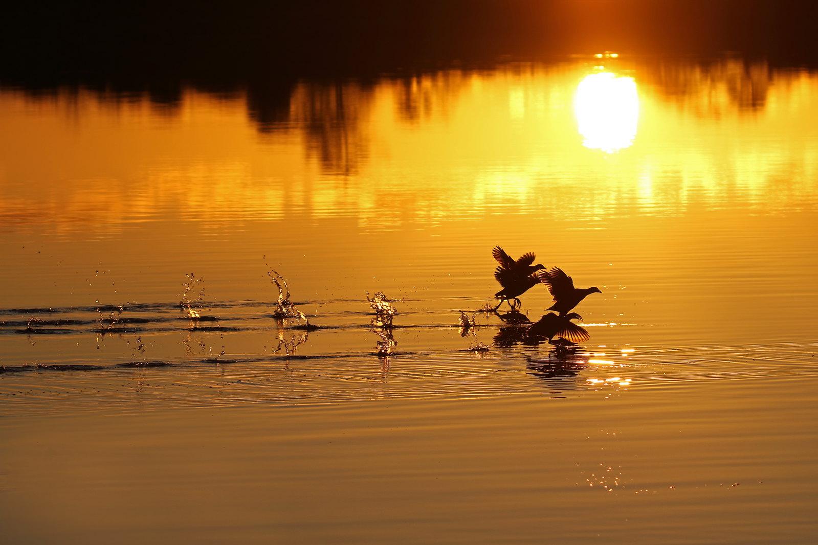 Sunset on Hatchet Pond