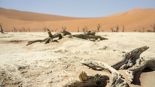 Dead wood, deadvlei