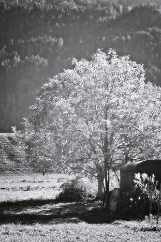 fruit garden | by bwstock