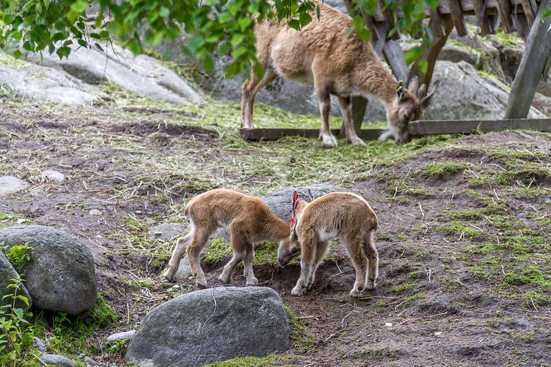 Finnland 2010 / Helsinki  - in the Zoo