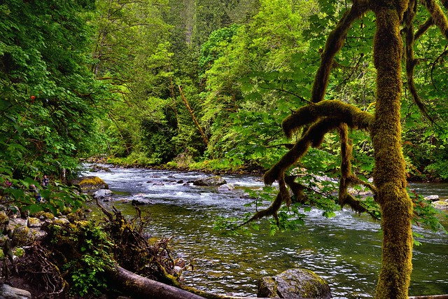 Walking Along the Riverbank and Shores of the South Fork Snoqualmie River
