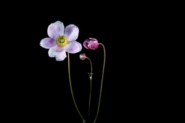 Macro Flower Pink Yellow Centre-
