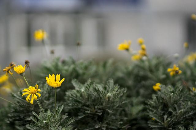 Flowers beside the road