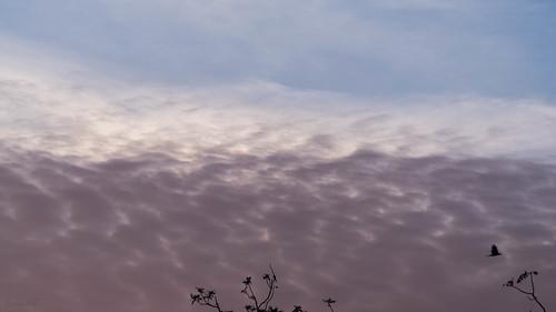 cloud sky sunrise ahmedabad gujarat india in