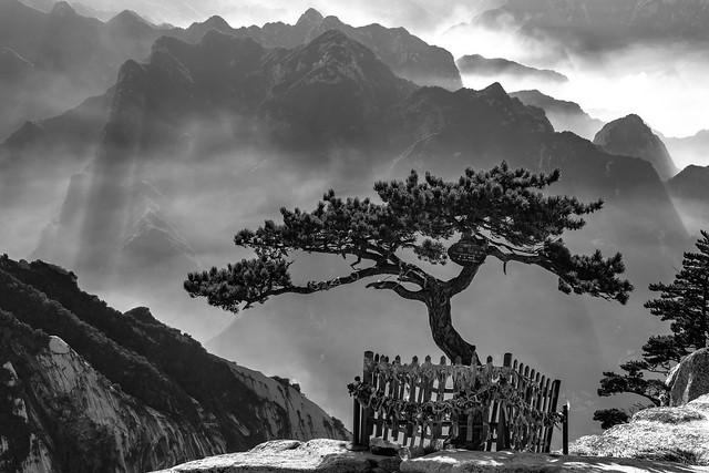 *Hua Mountains @ The holy tree*