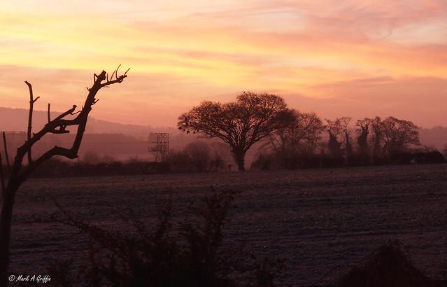 pinky misty frosty