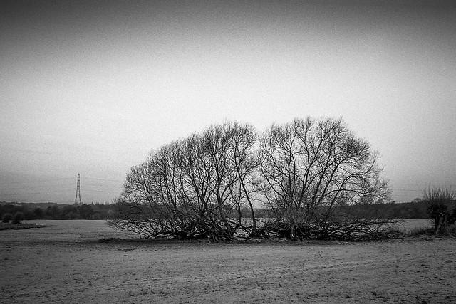 FILM - Split willows