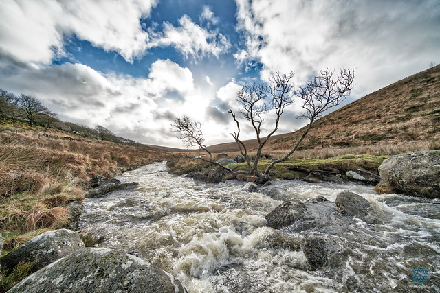 River Dart Wistmans Wood