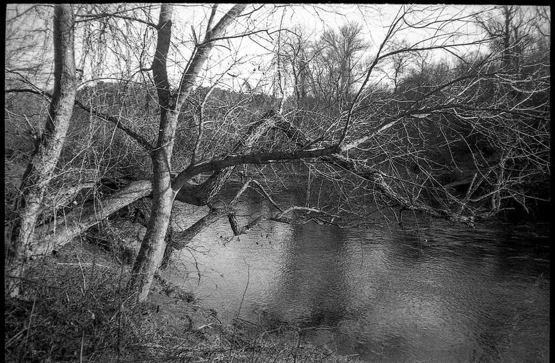 riverside, trees, one overhanging, French Broad River, Carrier Park, Asheville, North Carolina, Olympus XA, Rollei RXP 400, Moersch Eco Film Developer,  12.30.17