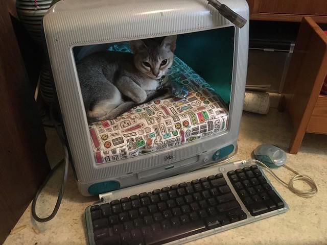 logan-iMac