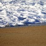 Crème d'écume sur lit de sable