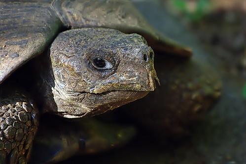 Portrait of a Tortoise | by noelcmn