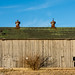 Barns and Agricultural Structures