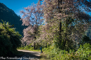 Pfutsero Phek Nagaland (25) | by travelling slacker