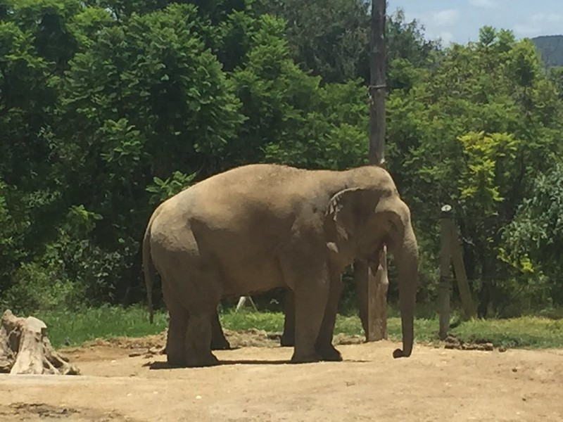Elefante en Africam Safari