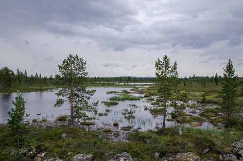 finnland landschaft moor moorlandschaft sumpf sumpflandschaft uutela landscape marsh swamp fi
