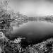 Christmas Eve Morning at Spring Garden Lake II