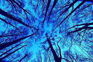 Lookin up in the woods