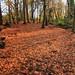 Autumn Carpet (Jane Eery, Dec 17)