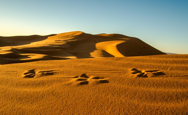 The footprints