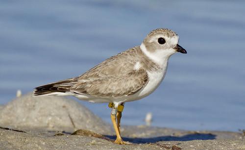 outdoor seaside shore sea sky water nature wildlife 7dm2 ocean canon florida bird ft desoto