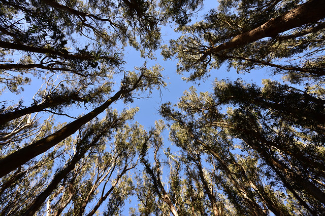 Looking Up from
