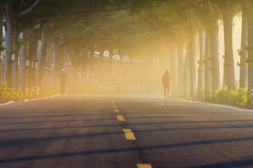 台灣 屏東縣潮州鎮 步道 健走步道 光 陽光 斜射光 光影 light sunset 行道樹 sony a77 tree
