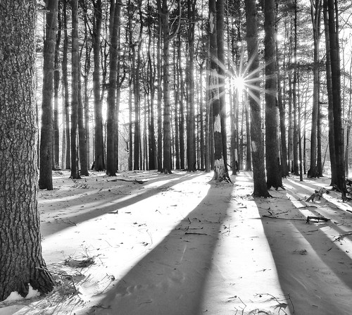 nature shadows sunstar woods landscape winter cold forest nj eastbrunswick monochrome trees bw pines elkspinewoods snow northbrunswicktownship newjersey unitedstates us
