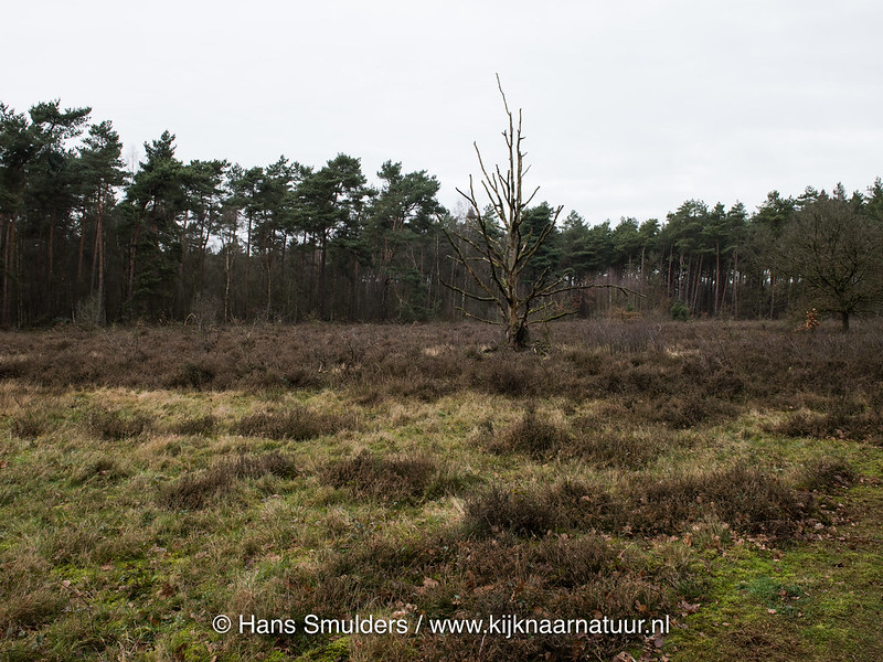 Heide Speckerweg Leudal-818_0023-