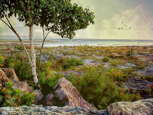 lakehuron spindrift whiskeyharbour brucepeninsula ontario canada solitude privacy txeep