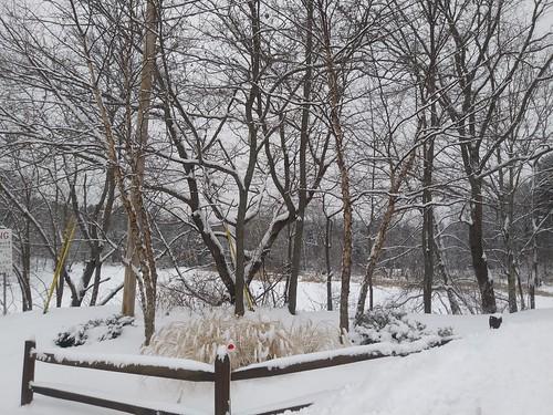 frozen winter snow lisbonmaine newengland december2017 millerpark