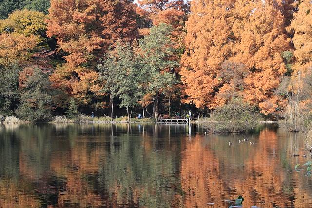 Late Autumn at Sanpoji Pond