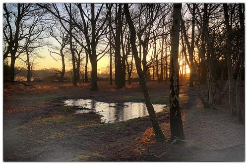 elstead england unitedkingdom gb sunrise frost reflection