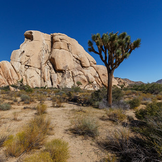 Joshua Tree - typical view | by LarsGerritS