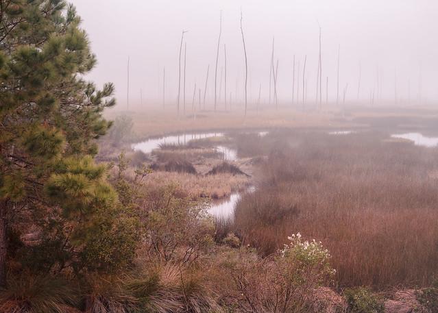Winter Marsh on the Bulltown Swamp