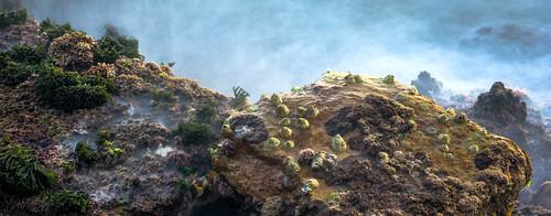 nikon d7100 rocks grass shell ocean waves longexposure long exposure mystical color colour green yellow brown blue plants coast 50mm