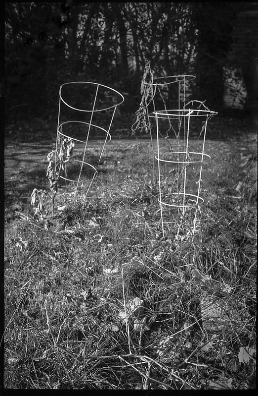 tomoato cages, dried grasses, neighborhood, West Asheville, North Carolina, FED 4, Arista.Edu 200, Moersch Eco Film Developer, mid November 2017