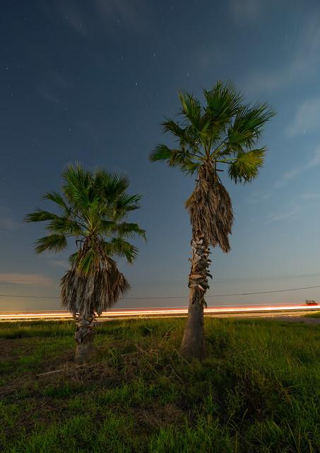 46 Palms