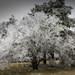 L'arbre givré by Lucille-bs