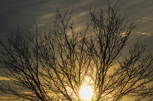 lancaster lancastercounty pennsylvania pa tree treebranch silhouette silhouettes sunset sun sunlight sunglare clouds cloudy onwardandupward lancasterpa